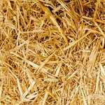 自然栽培米・有機栽培米の平均収量|村田自然栽培米ササニシキ