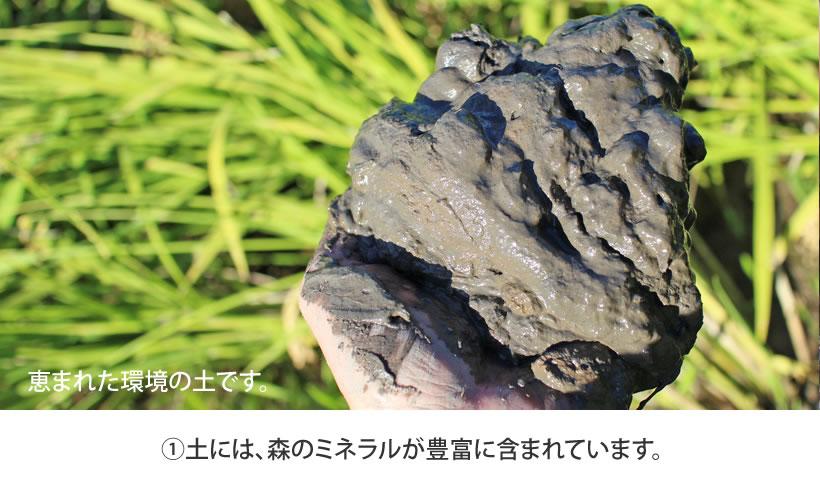 ①広葉樹のクヌギ林が作り出すミネラル豊富な土
