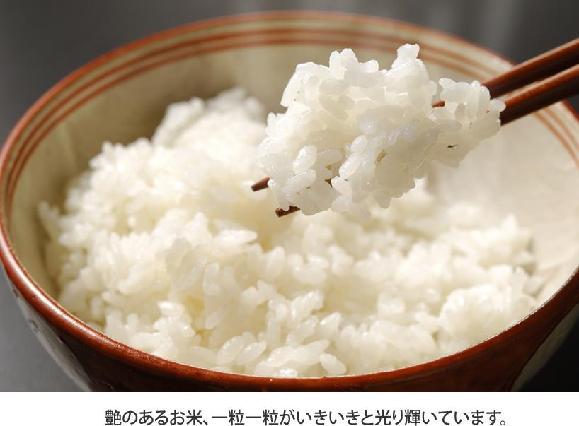 艶のあるお米、一粒一粒がいきいきと光り輝いています