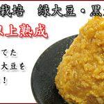 お味噌【自然栽培米, 自然栽培大豆、自然栽培押麦】