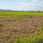 無農薬米が闘う虫たち|村田自然栽培米ササニシキ