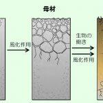 有機栽培米は良いのか|村田自然栽培米ササニシキ