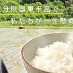 無農薬で育てるササニシキ|村田 光貴の自然栽培米ササニシキ