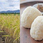 ササニシキはなぜお米アレルギーに効果が期待できる?|自然栽培でさらに安心のお米に