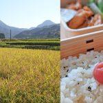 ササニシキやイセヒカリなどあっさり系のお米のアミロース値はどのくらい?