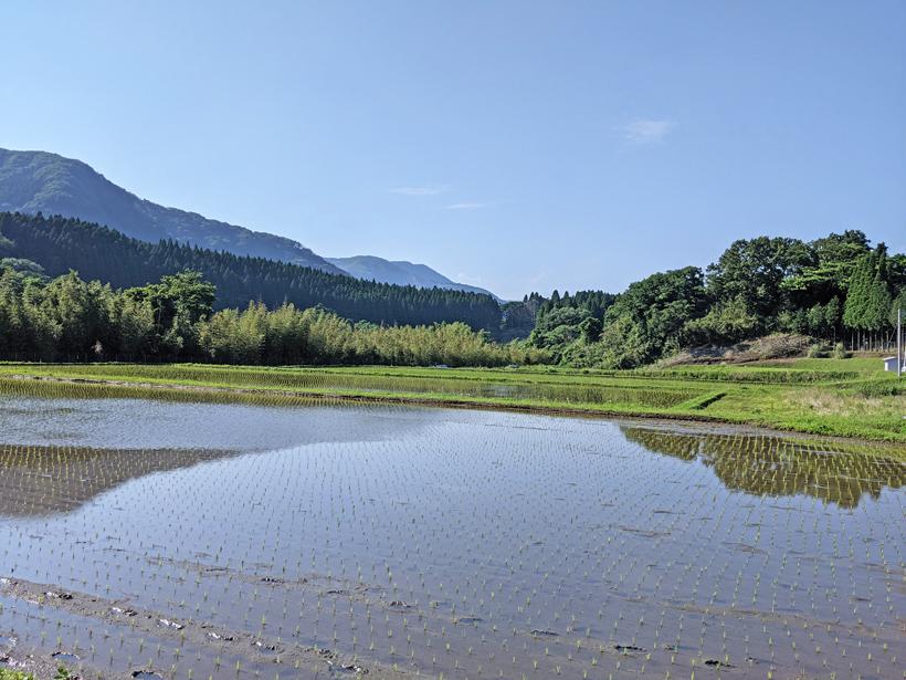 熊本県南阿蘇の自然栽培米水田