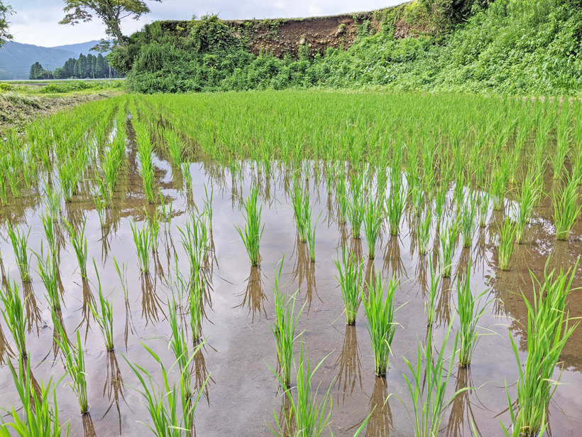 南阿蘇の環境保全農業