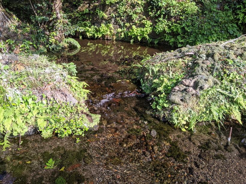大森自然栽培米水田に使用している湧水