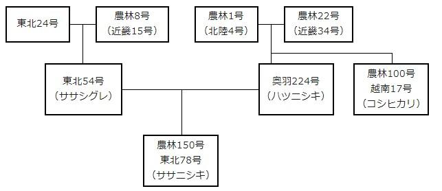ササニシキ系譜図