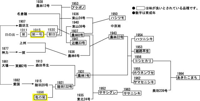 亀の尾・旭系譜図